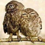 Приятное сделала – 44 способа, как сделать мужчине приятное и разжечь былую страсть в отношениях   Sila-Misli.ru — портал о позитивном мышлении   Исполнение желаний силой мысли и позитивным настроем. Задать вопрос психологу бесплатно
